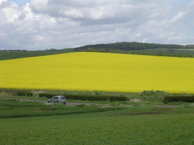 Farmland near Ardestie