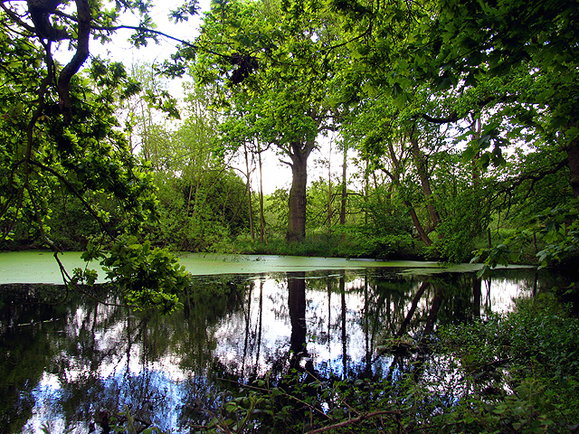 The Pond in the Woodland