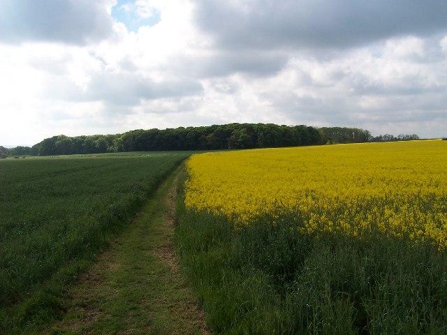 Willwick Hill Plantation