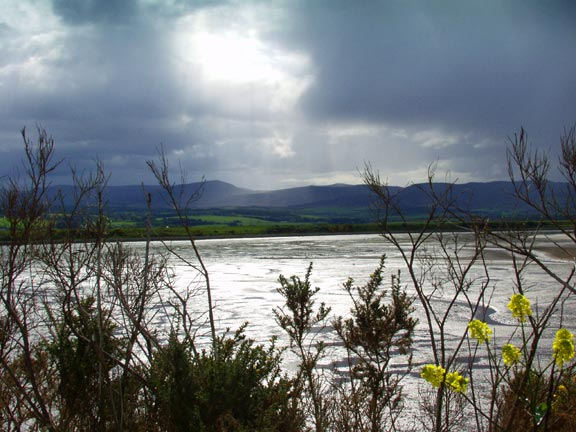 Mudflats of the Dornoch Firth