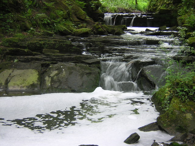 Guiseley Beck, through Spring Wood