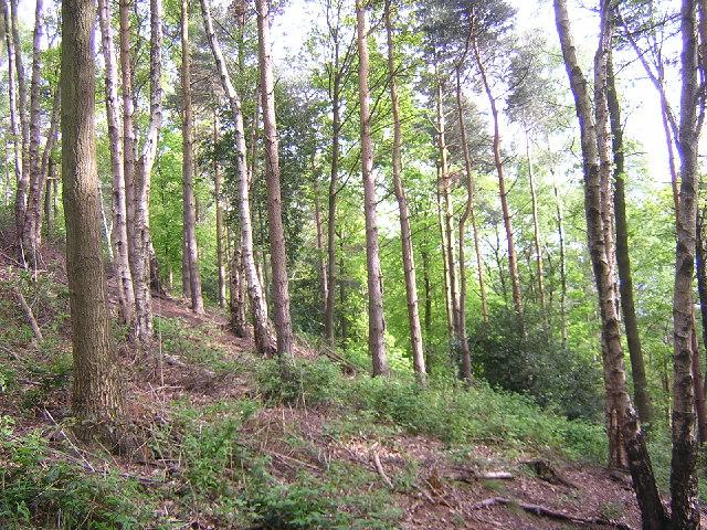 Belmont Wood, Yeadon