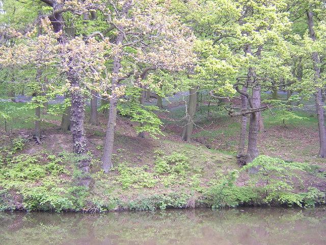 Farnhill Wood