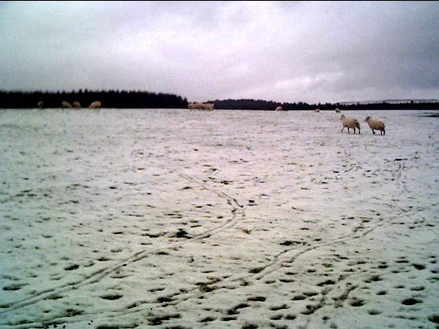 In a field in Llanfihangel Glyn Myfyr