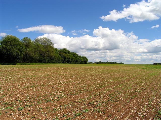 Farmland: Ploughed Field