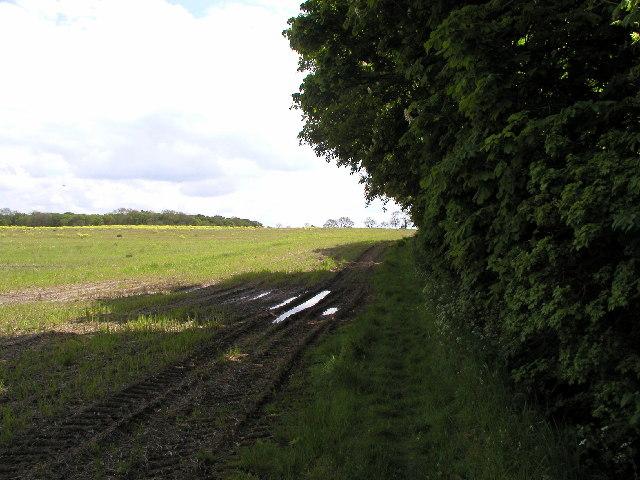 Near 'Bog Wood'