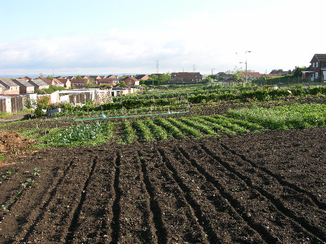 Allotments, Malton