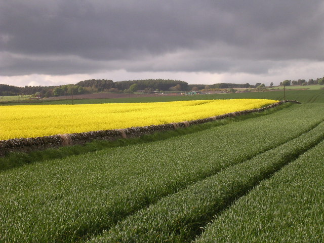 Farmland north of Leyshade