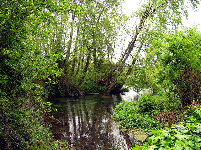 The Lambourn River at Easton