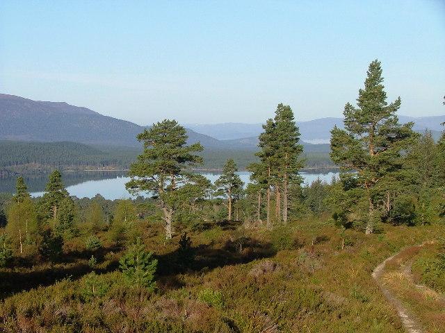 Looking West towards Loch Morlich