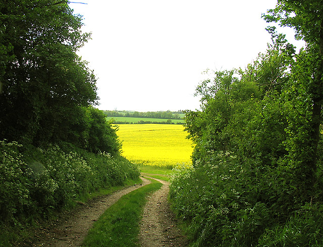 Rapeseed Farmland Between Elcot and Wickham Heath