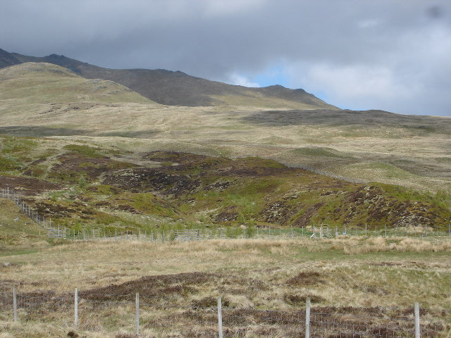 Regeneration on slopes of Ben Lawers