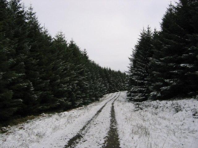 Forest Road, Whitelyne Common