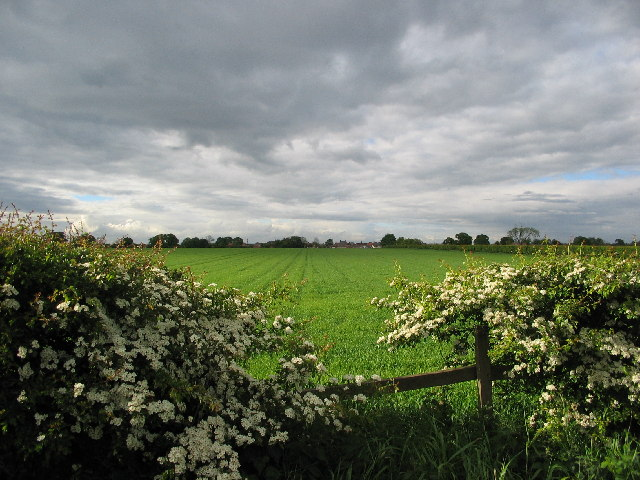 Knapton to the North