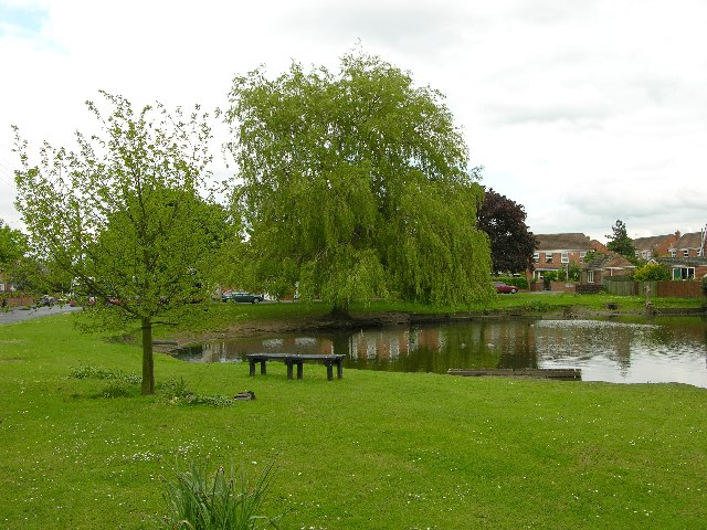 Wigginton village pond