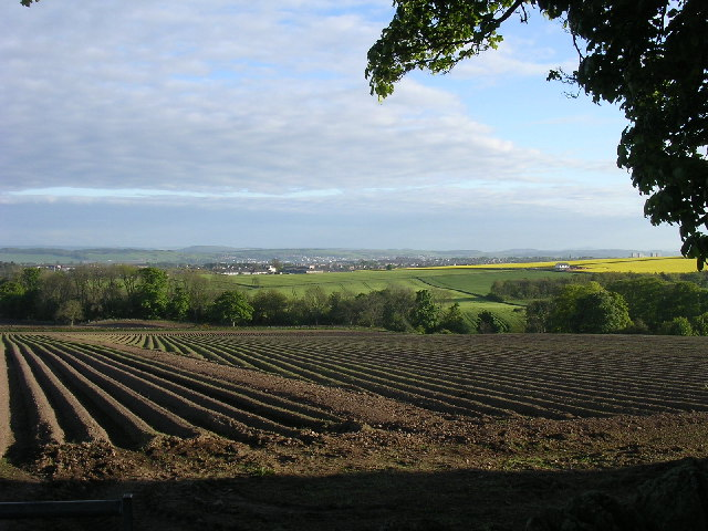 Tattie fields south of Craighill farm