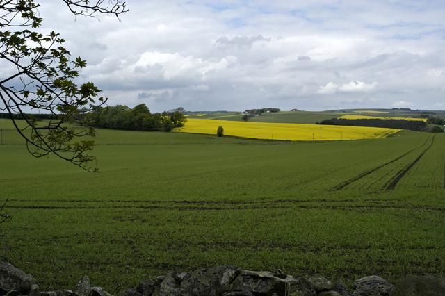 Crops near Methlick