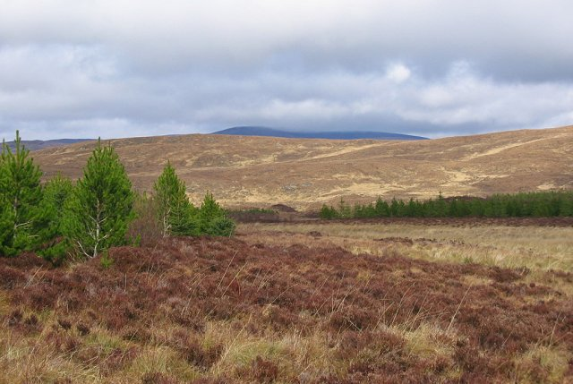 Young trees on Creag Loisgte.