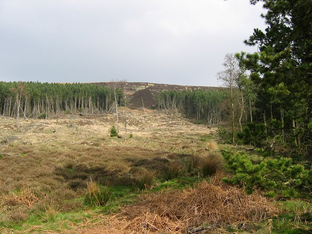Plantations on Cringle Moor.