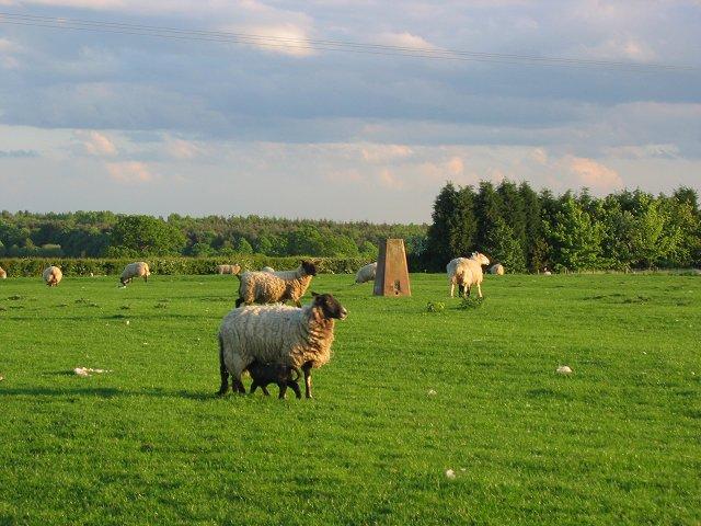 Tachbrook Hill Farm.