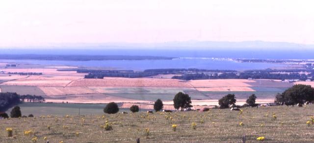 Califer View