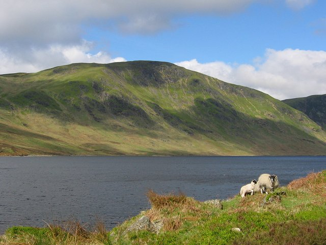 Ewe and lamb, Loch Turret.