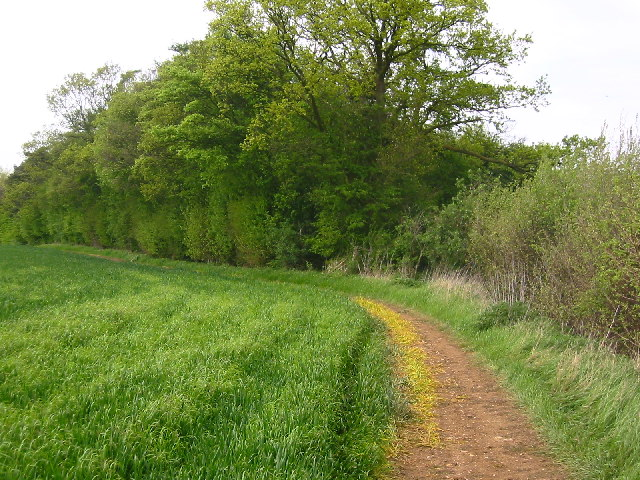 Between Weston Hills and Bush Wood