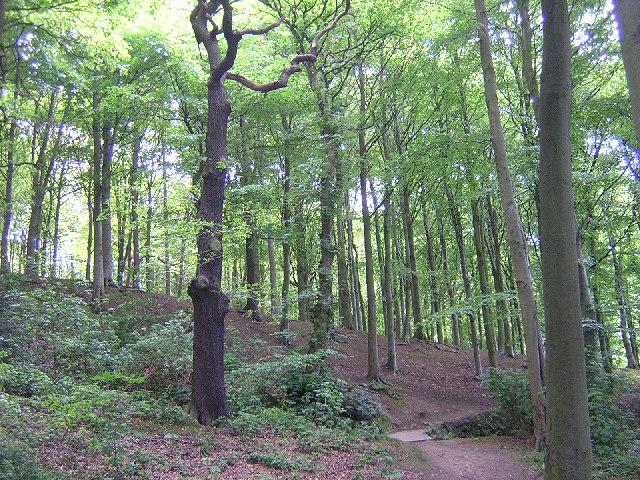 Jerrison Wood, Esholt