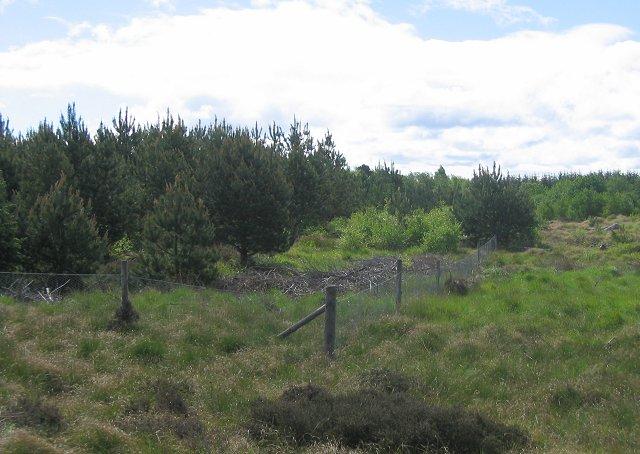 New plantings in Tenstsmuir.