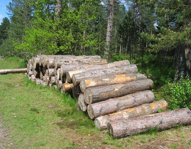 Log stack, Tentsmuir.