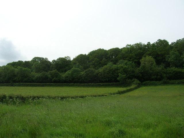 Woods near Wick