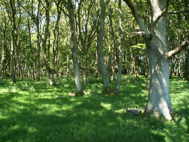 Oak woodland above Cors Fochno