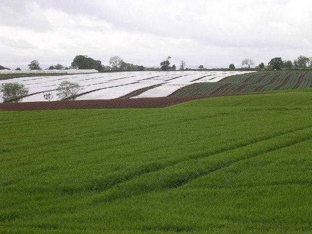 East Scryne  farm near East Haven