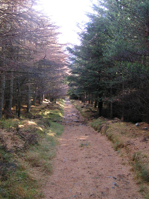 Glendoll forest path