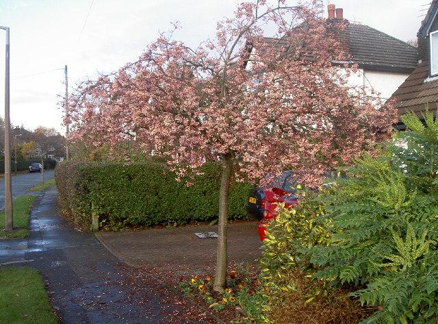 Wyngate Road, Cheadle Hulme
