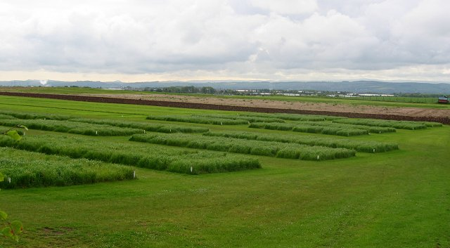 Research plots, Boghall.