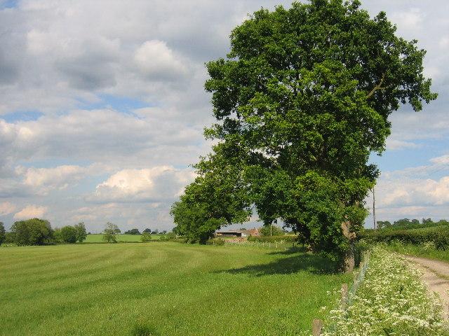 Bulloak Farm