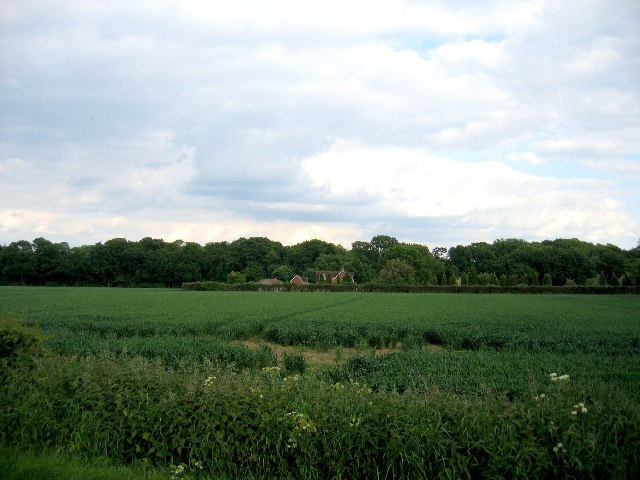 Newland Wood