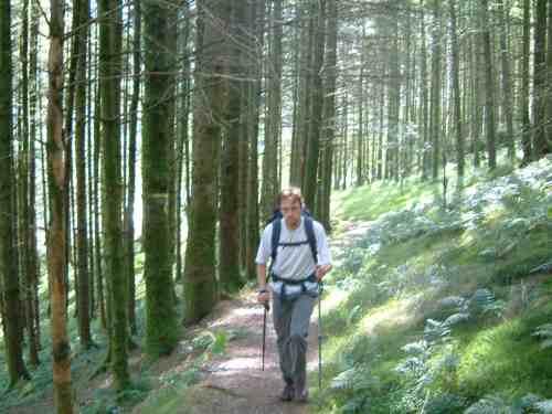 Cefncwellyn woods