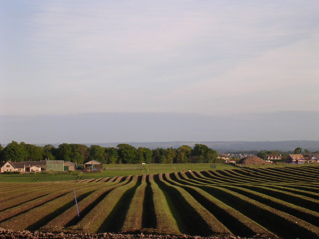 Ridges and furrows near Wellbank
