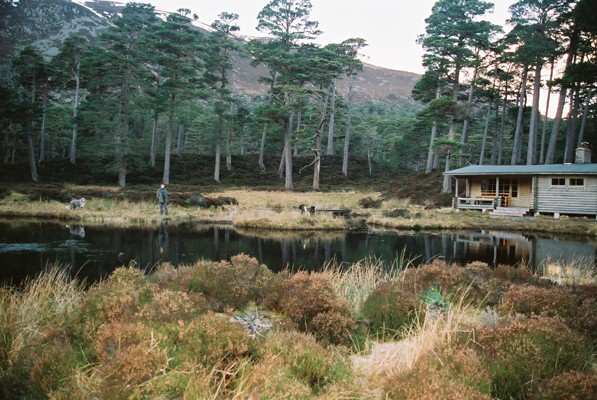 Honka Log Cabin