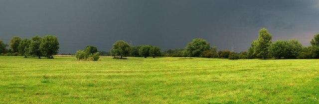 Pasture on Stow-cum-Quy Fen