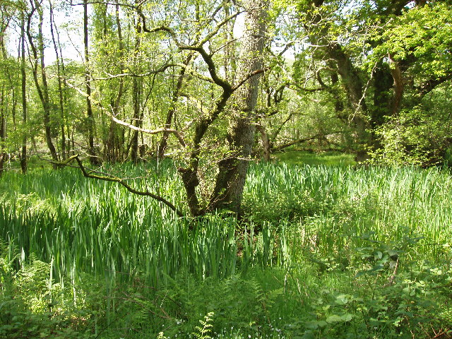 Carr woodland at Caerlaverock Castle, near Dumfries