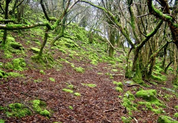 Mossy woodland near Porth yr Ogof