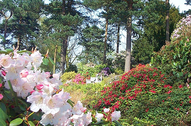 Lea Rhododendron Gardens