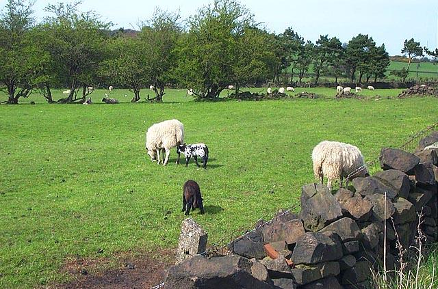 Farmland near Doehole