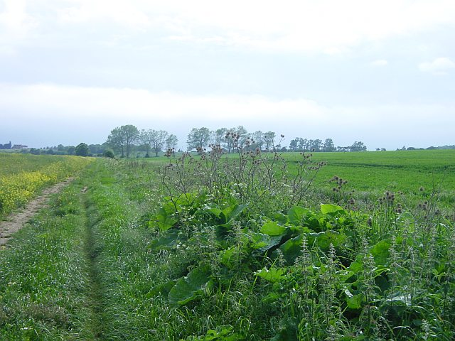 Ditch near Great Norwood