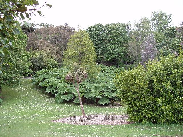 Logan botanic gardens, Gunnera grove