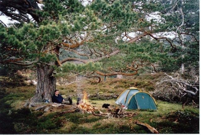 Scots pine in Glen Derry