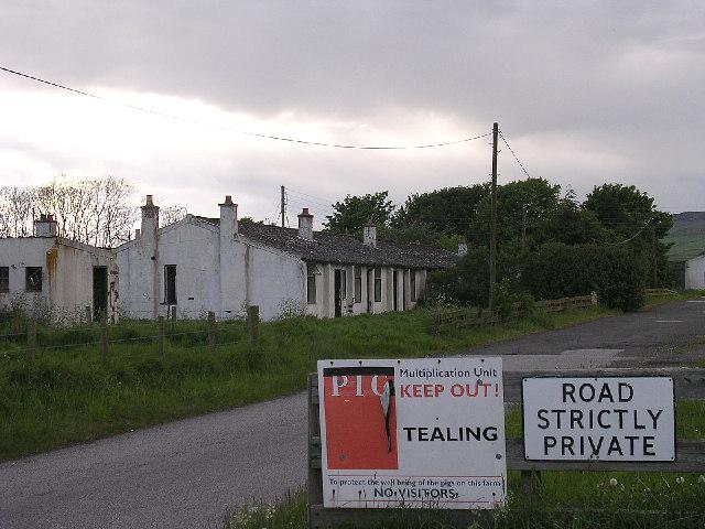 Muir of Pert pig farm